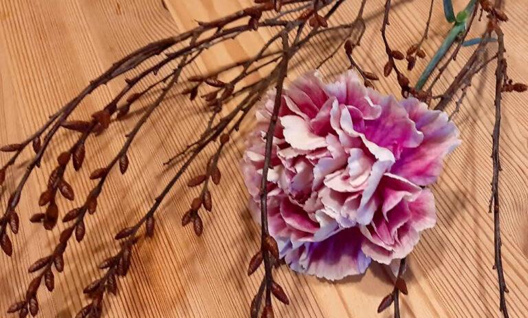 Die Landnelke oder Edel-Nelke (Dianthus caryophyllus)